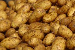 ziemniakiI.jpeg