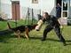Galeria Policyjny pies Bari w świetlicy
